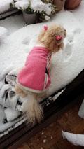 ドカ雪の日6