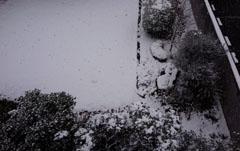 ドカ雪の日1