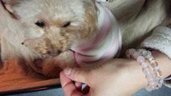 豹変犬のティータイム5