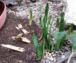 早春の息吹4