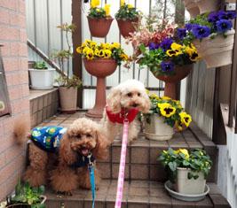 れっつらごー? お花とわんこ