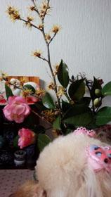 おうちの花 1