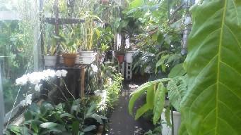 温室のひとときb