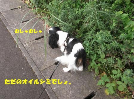 02_convert_20150819181045.jpg