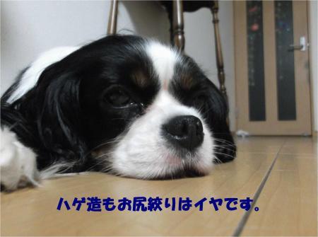 04_convert_20150812183511.jpg
