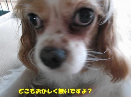 04_convert_20150818174950.jpg