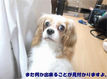 05_convert_20150803201124.jpg