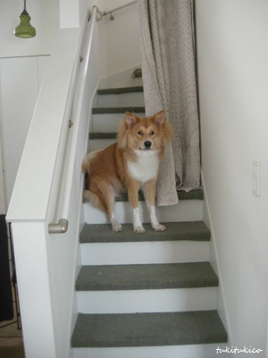 階段の照明5