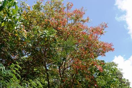 紅葉と青空 P1050717