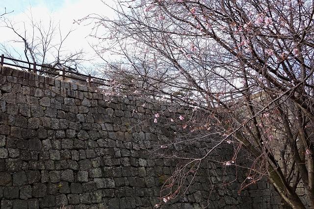 141207-marugamejyou-018-S.jpg