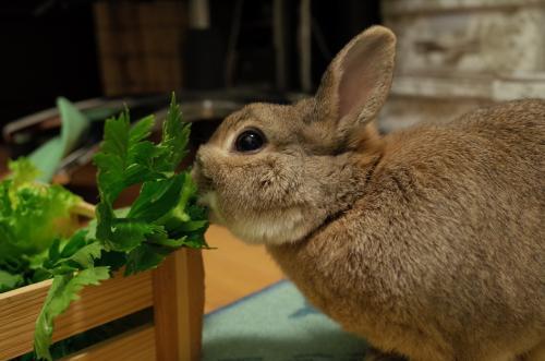 お野菜タイムだね♪