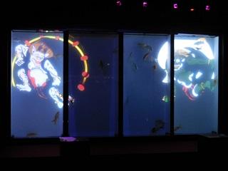 aquarium14.jpg