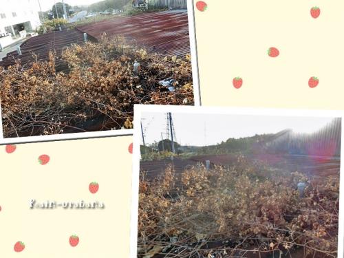 モッサモサの山盛り f(^ ^;