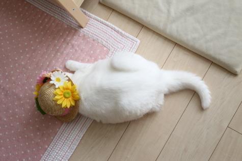IMG_4959urabanashi.jpg