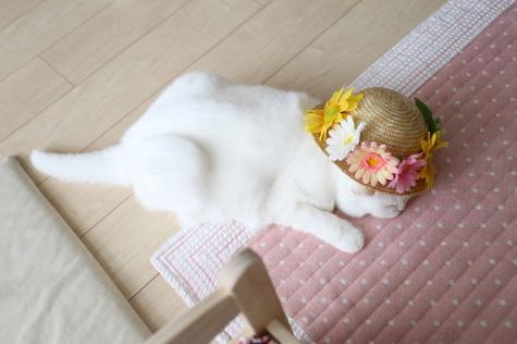 IMG_4961urabanashi.jpg