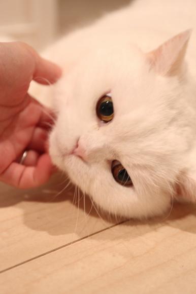 IMG_5475urabanashi.jpg