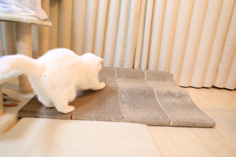 IMG_6246urabanashi.jpg