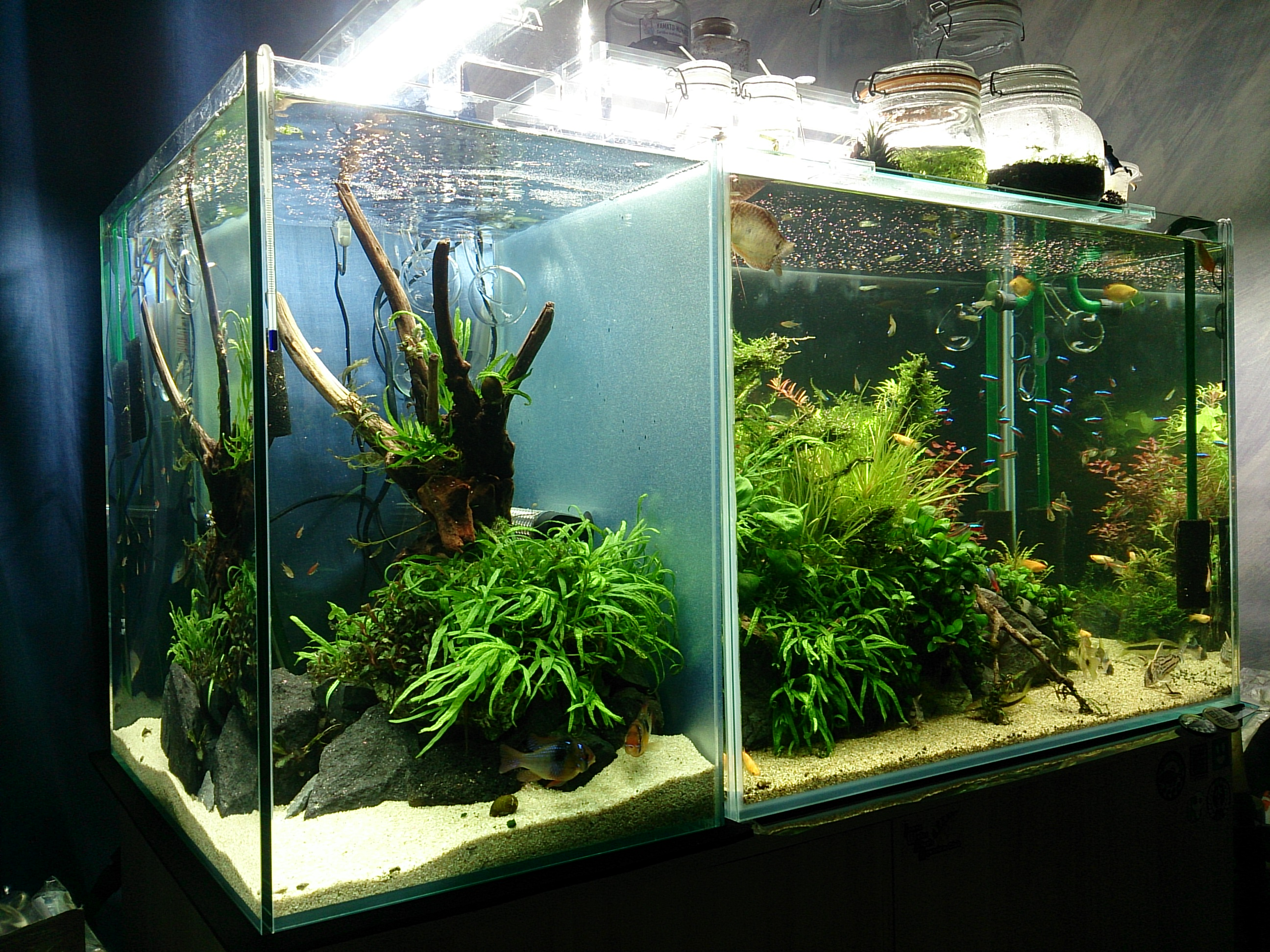 AquariumTank_20150112-03.jpg