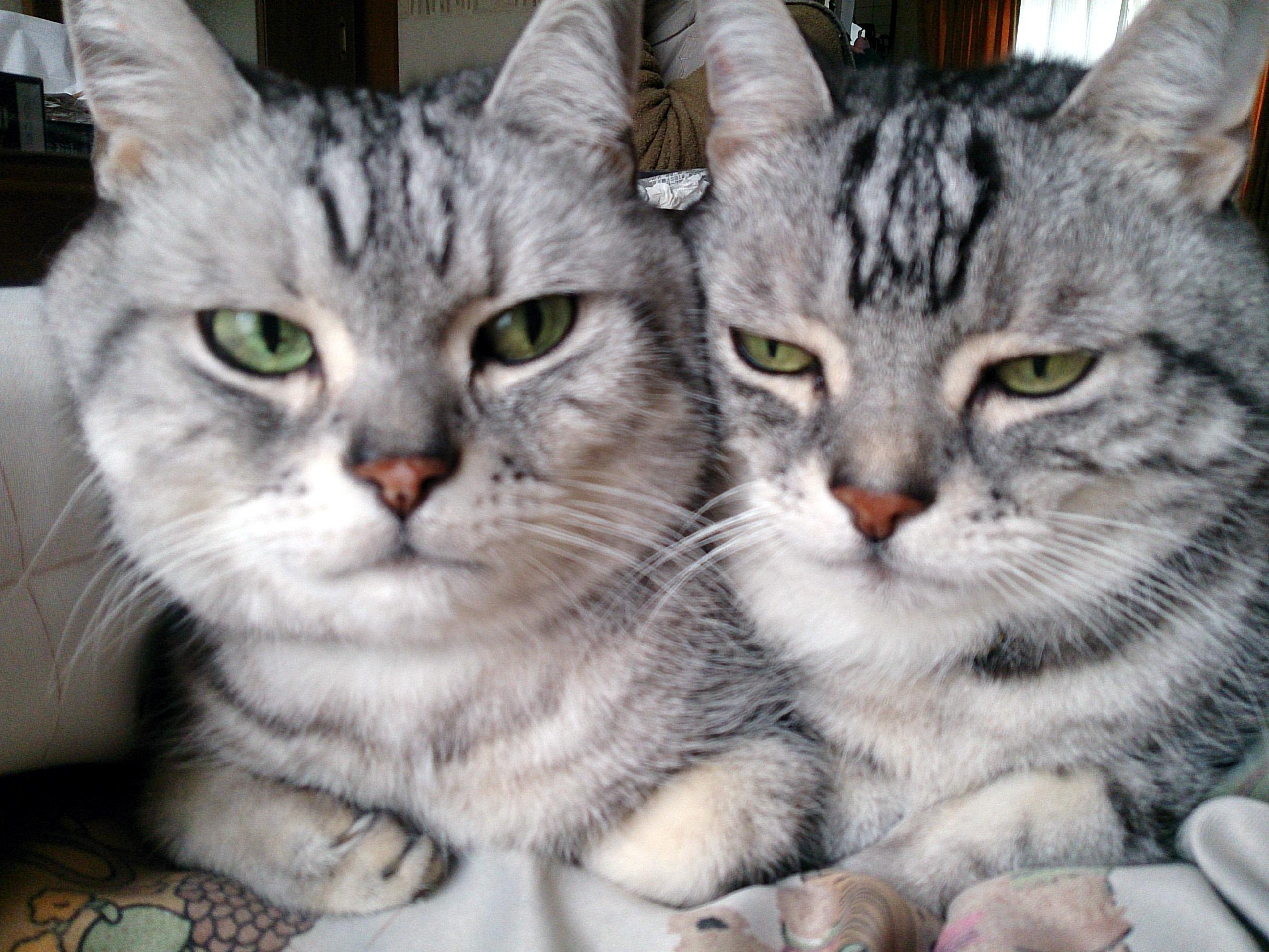 Cat_20150114-01.jpg
