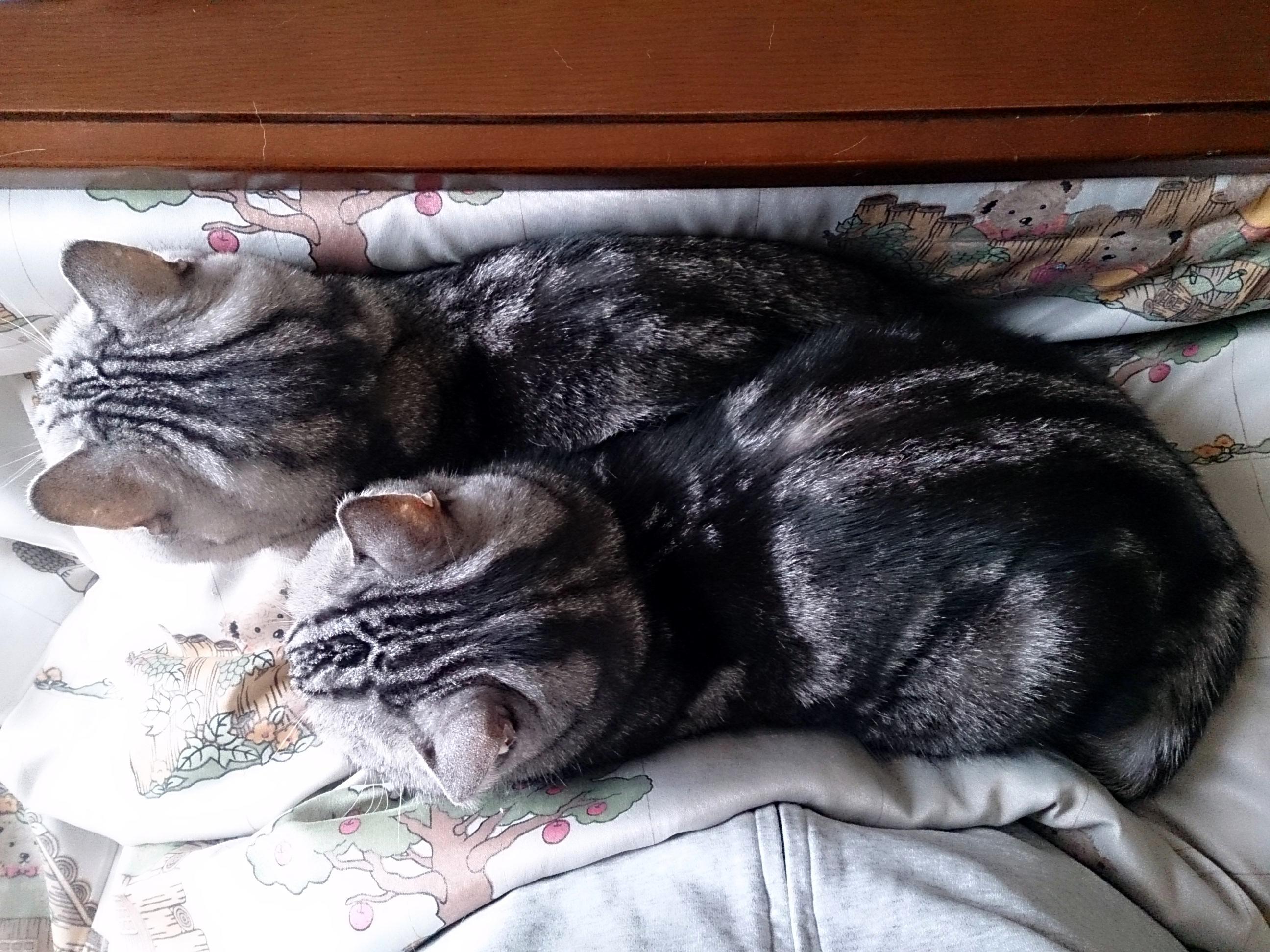 Cat_20150114-02.jpg
