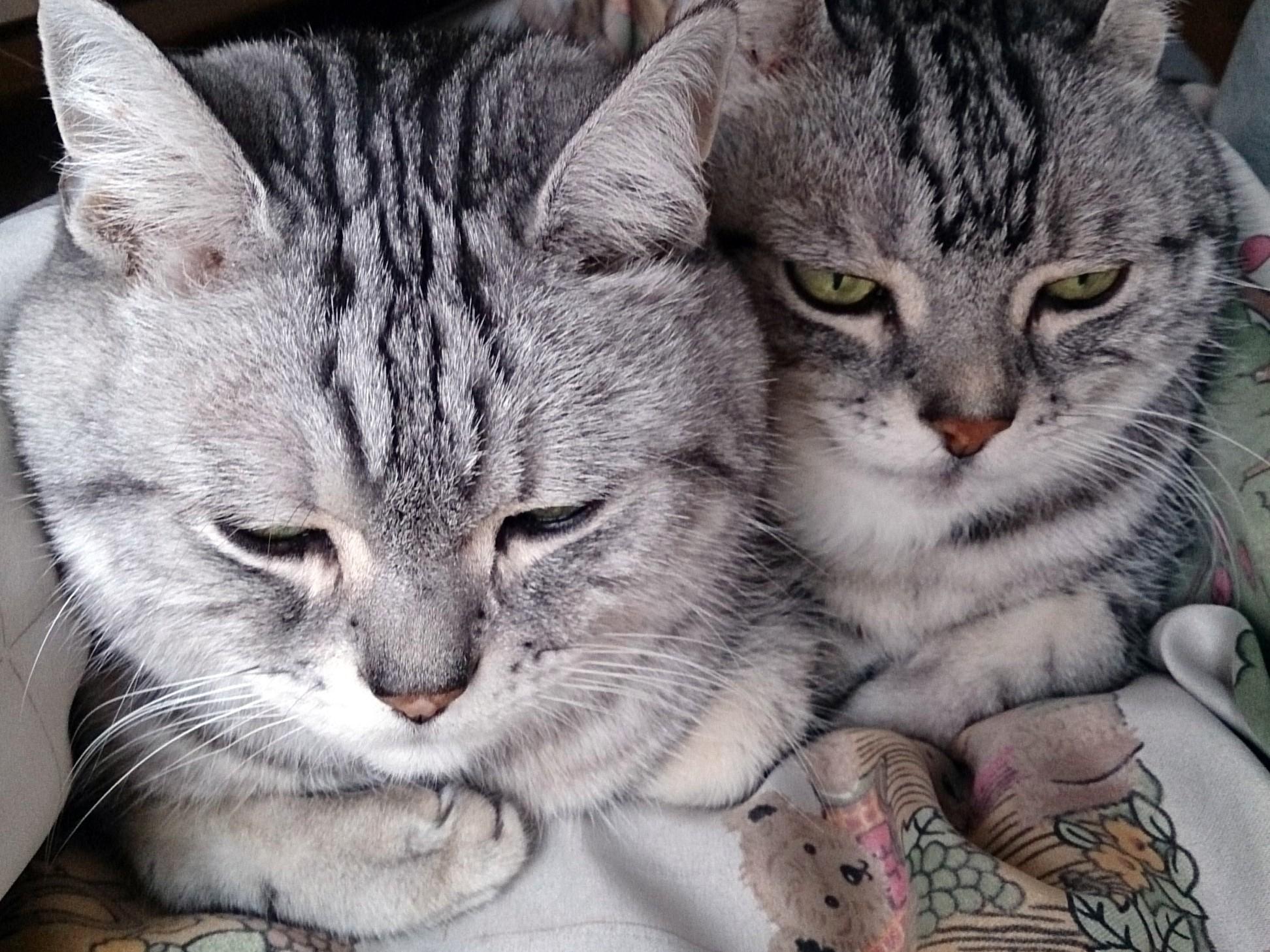 Cat_20150114-03.jpg