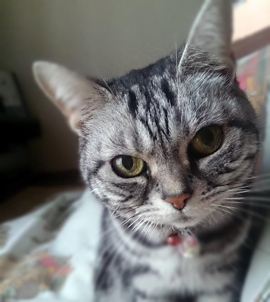 CatsDay-Ally_20150222-01-02.jpg