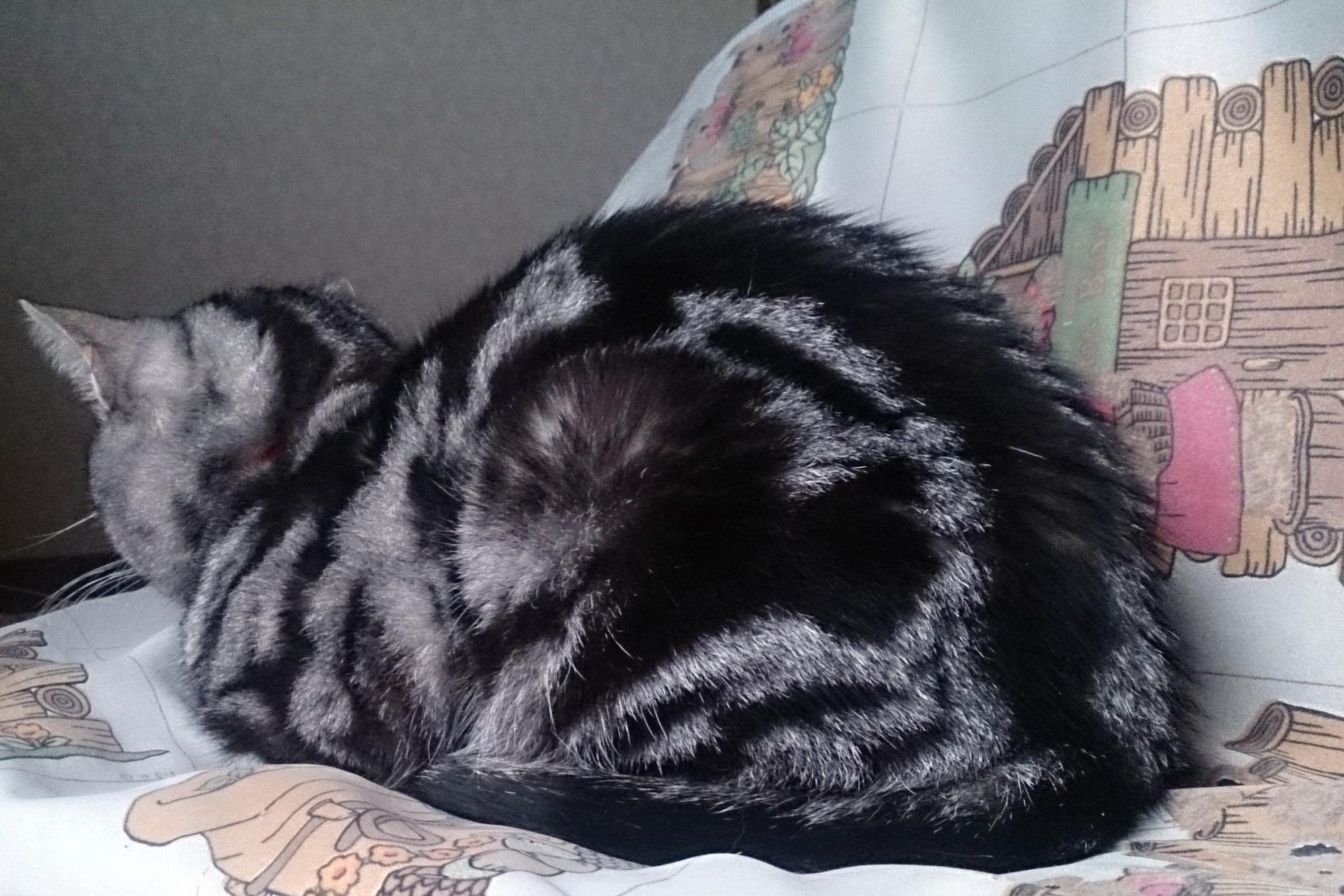 CatsDay-Ally_20150222-02.jpg