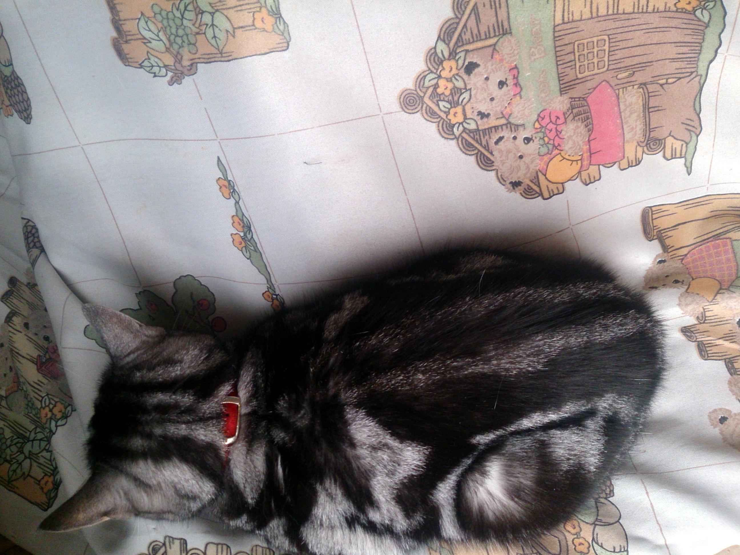 CatsDay-Ally_20150222-03.jpg