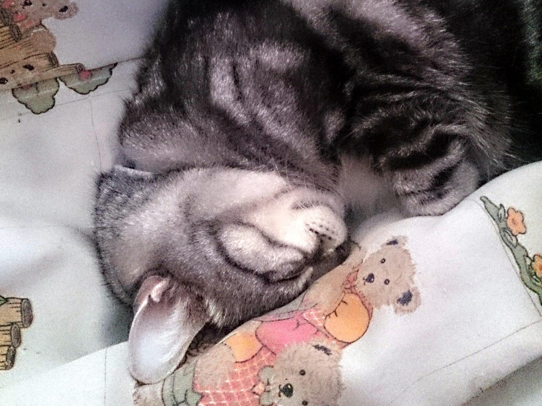 CatsDay-Totoro_20150222-02.jpg