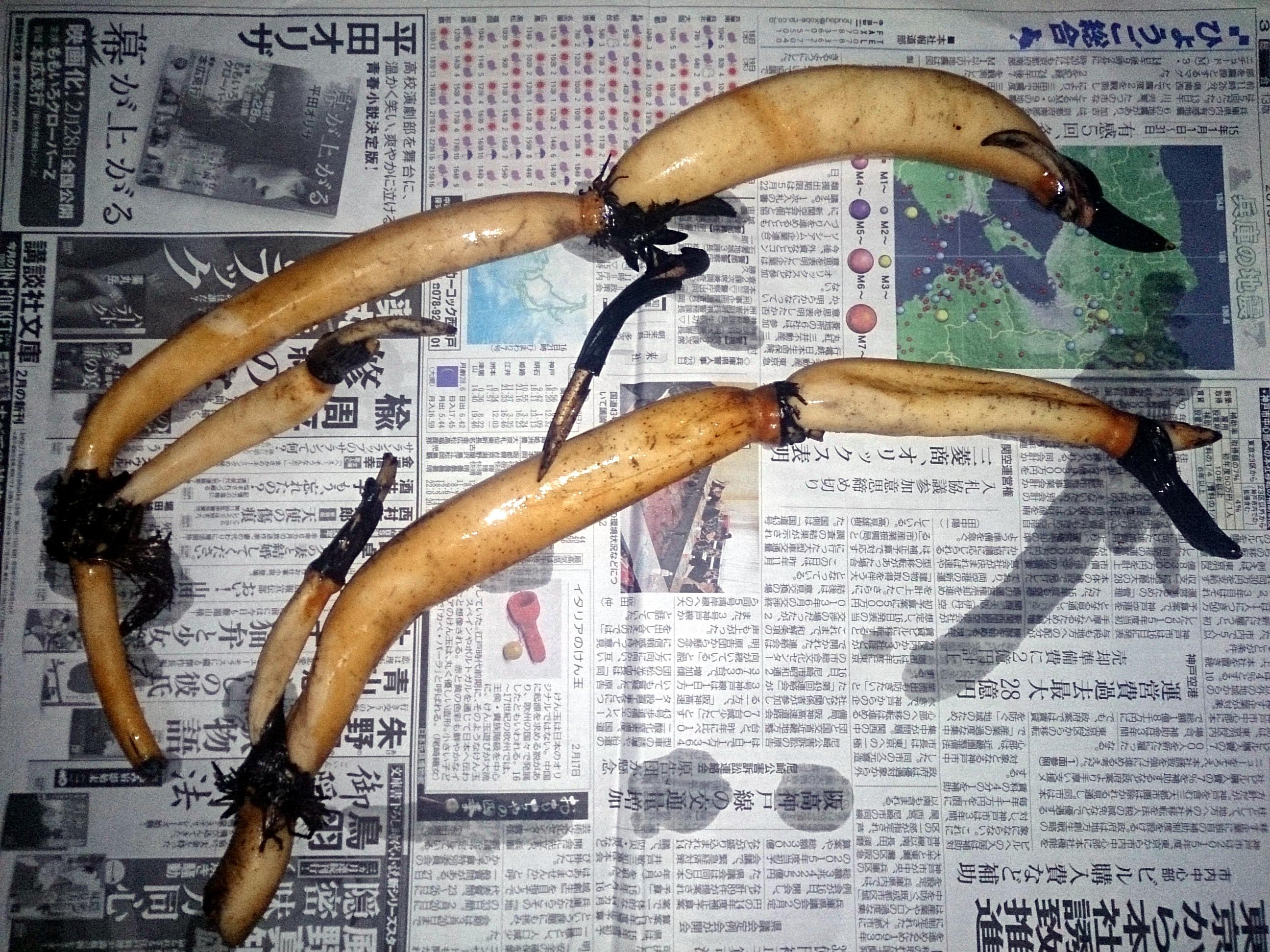 LotusTenjikuMadarabasu_20150218-01.jpg