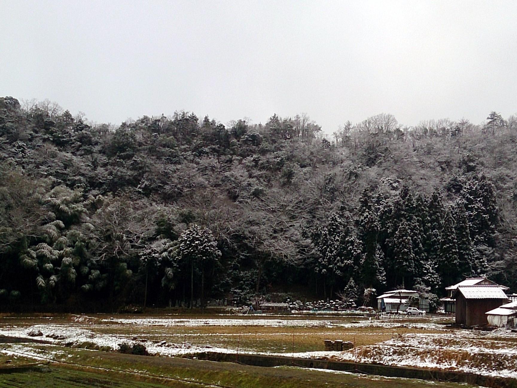 Snow_20150128-03.jpg