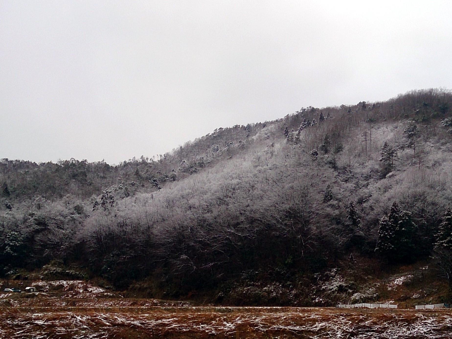 Snow_20150128-04.jpg