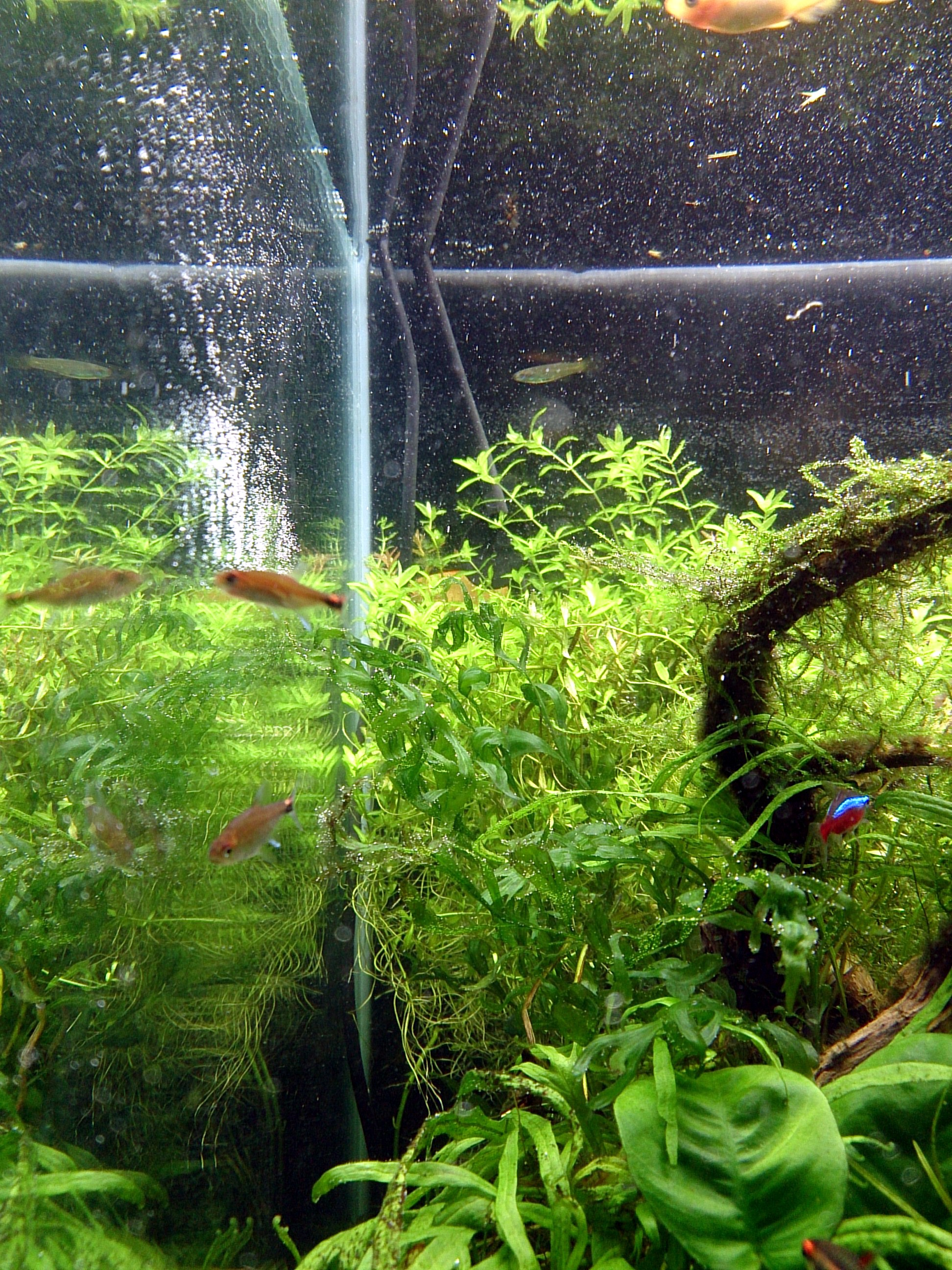 WaterChange_20150115-03.jpg