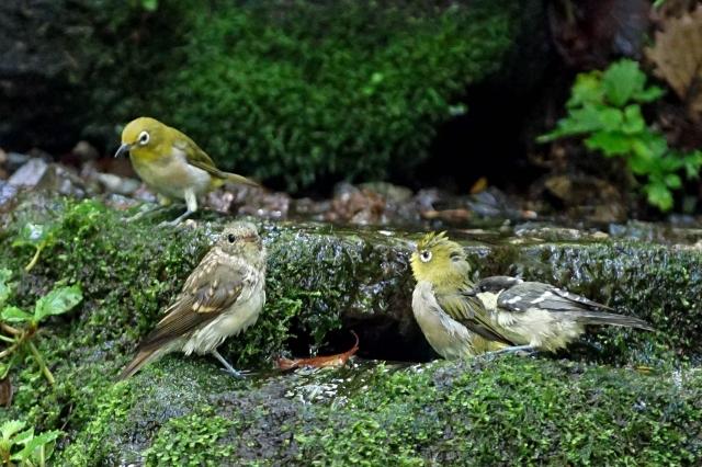 水場の鳥たち