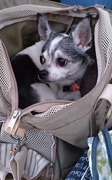 my bagで寛いでるタロちゃん