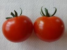 房なりあまみミニトマト