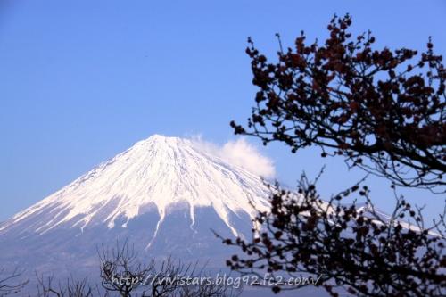富士山と梅ノ木