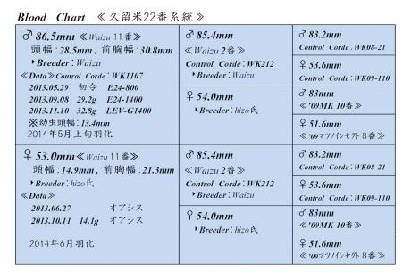 久留米22番血統構成表