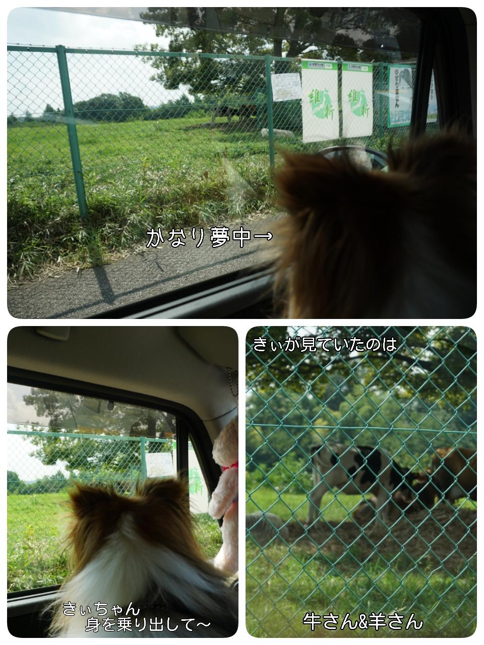 2015-08-15-15-03-17_deco.jpg