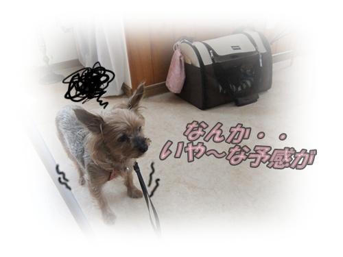 2015_0819moko愛の受診0004