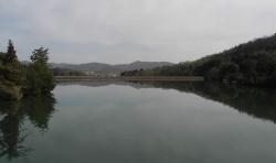 公園の池が綺麗です。