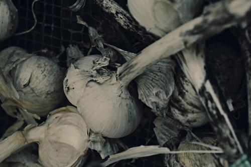 garlic15_7_27.jpg