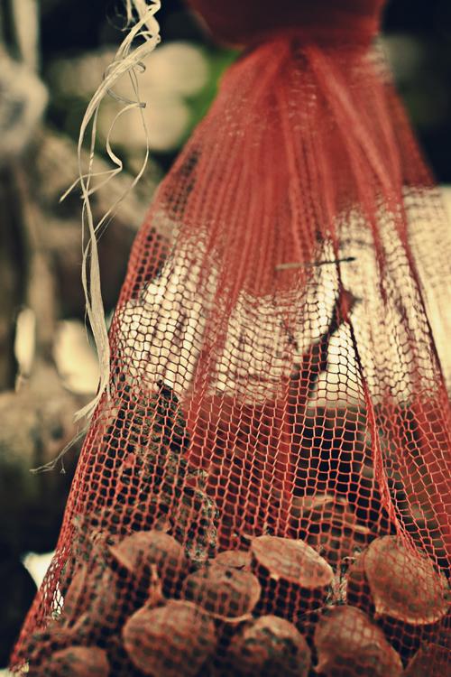 garlic15_7_27_2.jpg