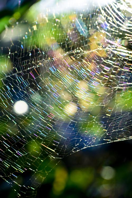 spiders_web_15_7_26_e_10.jpg