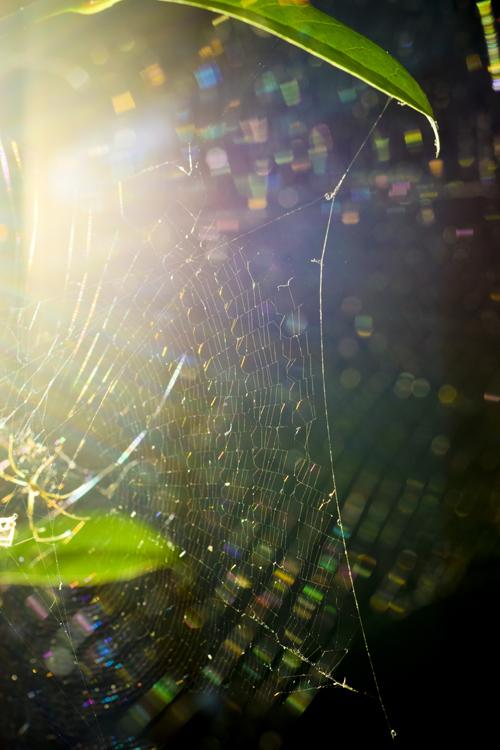 spiders_web_15_7_26_e_3.jpg