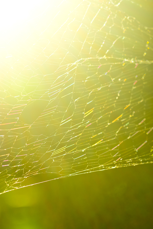 spiders_web_15_7_26_e_6.jpg