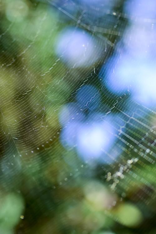 蜘蛛の巣 干渉縞