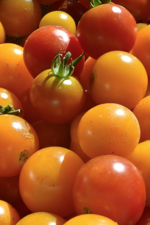 tomato_15_7_26.jpg