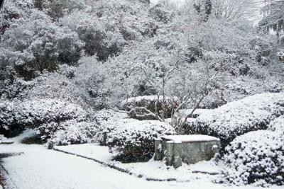180庭の雪
