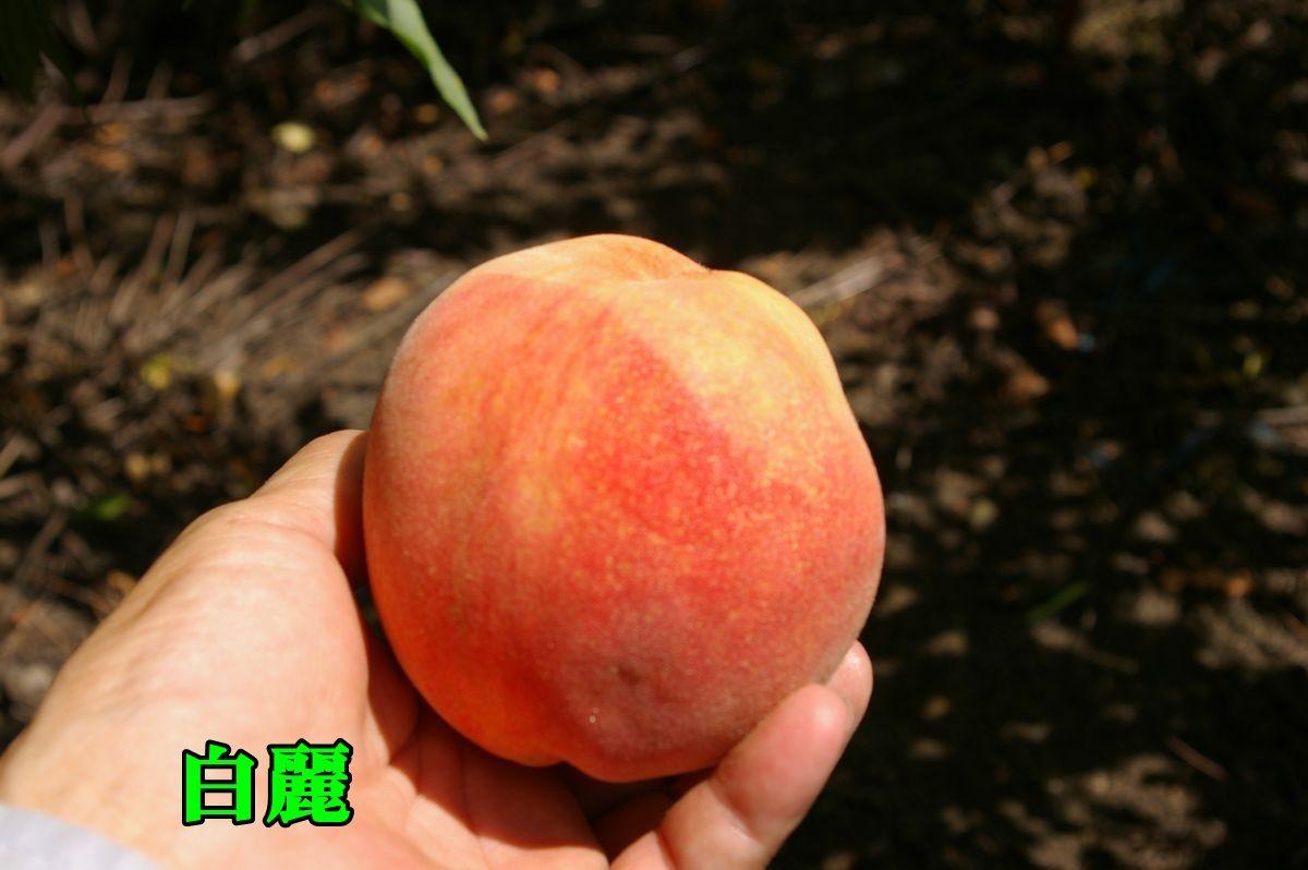 1hakurei150810_011.jpg